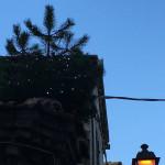 Albero addobbato per il Natale