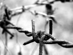filo spinato nei campi di sterminio, shoah, giornata della memoria