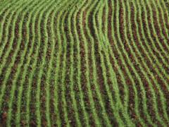 agricoltura, piante, natura, prodotti agricoli, campi coltivati