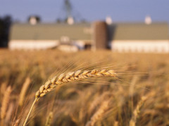 agricoltura, fattorie, piante, natura, prodotti agricoli