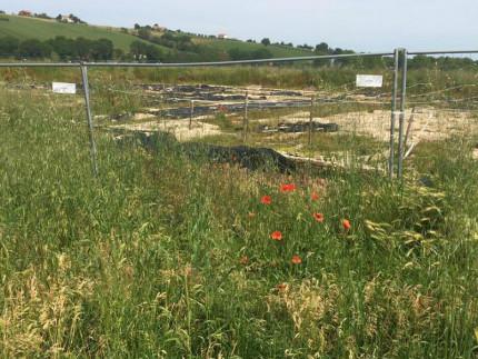 L'area archeologica Le Muracce in stato di abbandono
