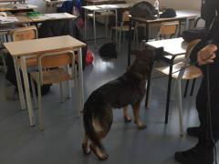 I controlli antidroga presso gli istituti superiori e le scuole di Senigallia