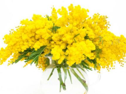 Festa della donna, mimose