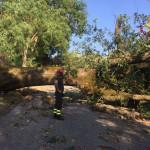 Serra de' Conti: danni ad alberi per il maltempo