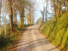 Strada di campagna, passeggiata, camminata