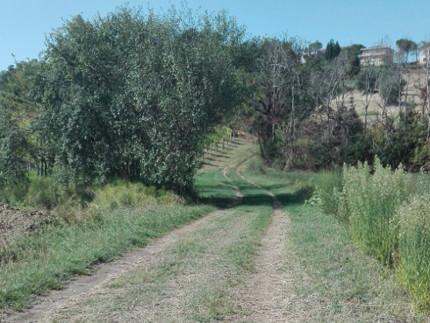 Sentieri, percorsi e passaggi da riscoprire nei borghi delle Marche