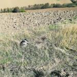 Il cane Bella, morto folgorato da un cavo elettrico a Ostra