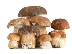 funghi, raccolta funghi