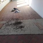 Sporcizia e degrado all'ex Chiostro di San Francesco a Ostra Vetere