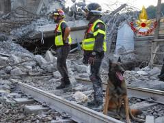 Unità cinofile dei Vigili del Fuoco a Genova dopo crollo del ponte Morandi