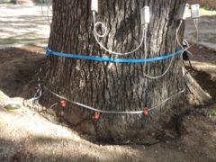 effettuate le verifiche sulla stabilità di alcuni importanti alberi del centro