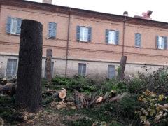 Alberi abbattuti nel giardino dell'Opera Pia Mastai Ferretti