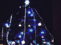 Cedro del Libano addobbato a Corinaldo per il Natale