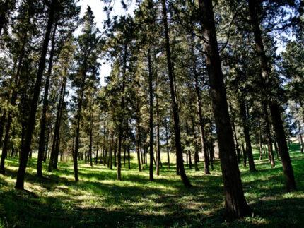 Il parco Selva di Boccalupo