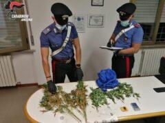 Carabinieri: sequestro marijuana