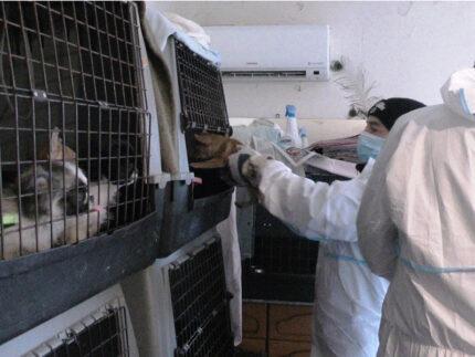 Sequestro dei cani