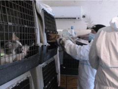 Sequestro cani a Trecastelli